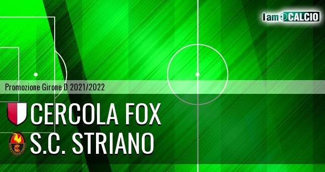 Cercola Fox - S.C. Striano